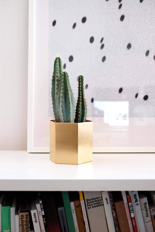 Cactus plantje voor een fotolijst op kantoor
